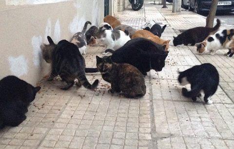 toomanycats